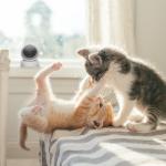 Logitech Celebrates National Cat Day