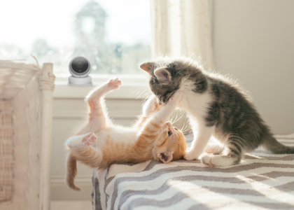 Logitech Celebrates National Cat Day